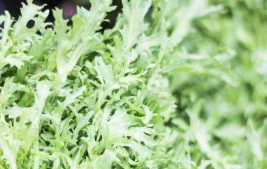 Salad_03