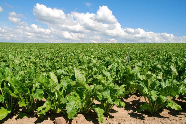 march april crops